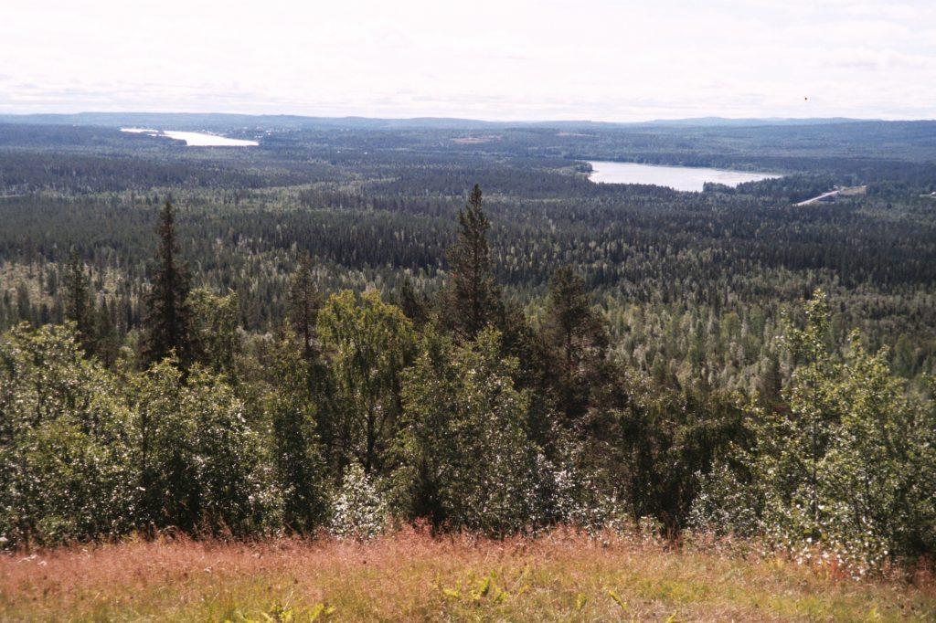 Van Aareavaara naar Pello. Lapse bossen