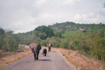 Olifanten op de weg