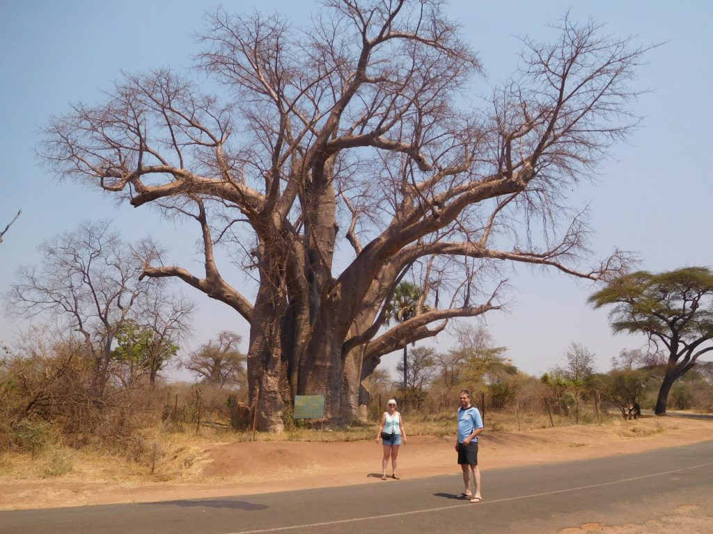 Parel van Afrika - Big baobab tree