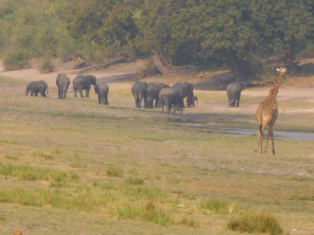 Parel van Afrika - Olifanten en giraf op safari