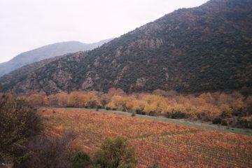 van skopje naar dolno kalaslari - tolwegen - wijnranken