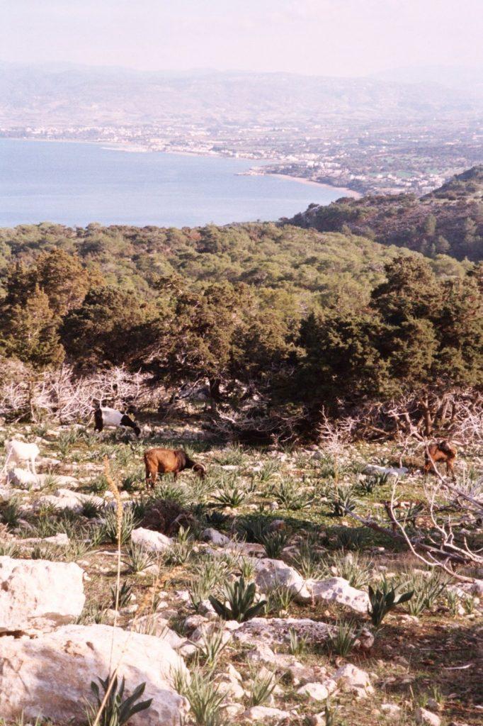Paphos - spijbelen - wandeling door heuvels