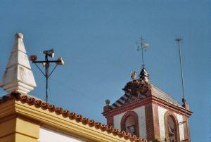 van Aracena naar Arroyo de la Plata - Klote - ooievaar
