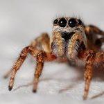 het gevaar op een fietsreis - de diieren - spin