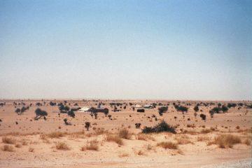 Van Bin Lanouar naar Chami - Krankzinnige klucht - nomadententen Mauritanië