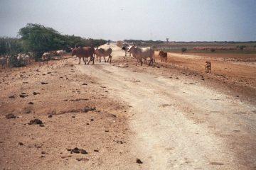 Van Rosso naar Barrage de Diama - Mooie dagen - Hobbelweg naar grens met Senegal