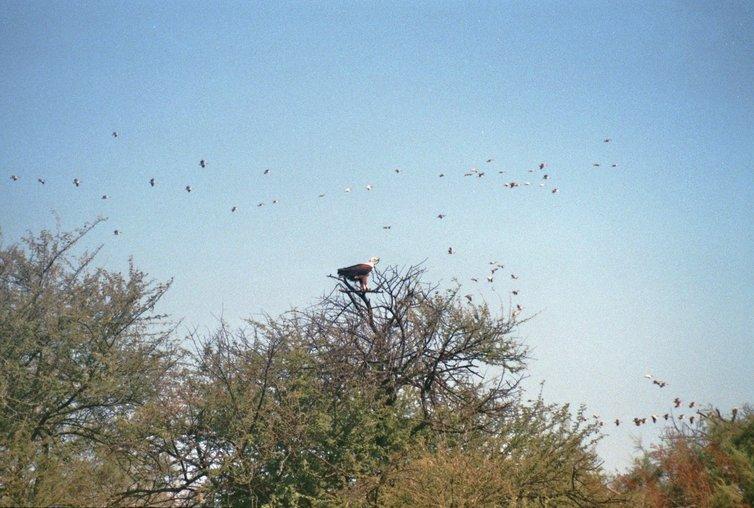 Vogelreservaat Djoudj