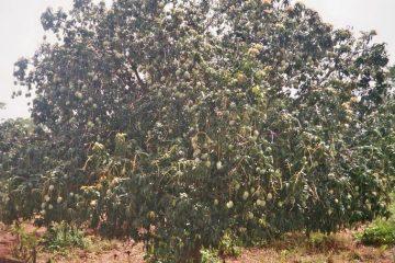 Van Bobo-Dioulasso naar Houndé - Thuis - mangoboom