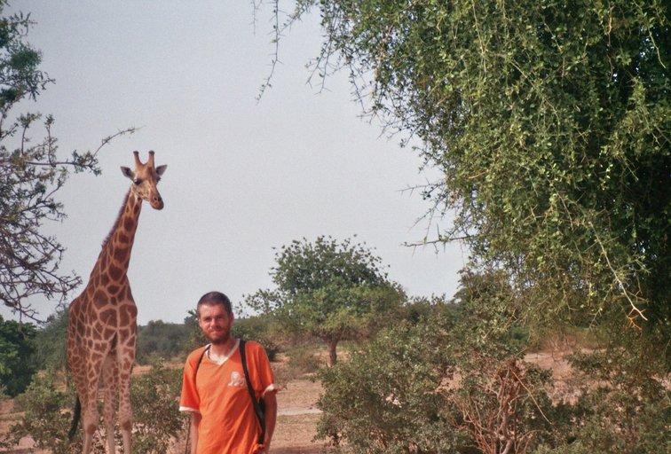 Van Niamey naar Dosso - Giraffen
