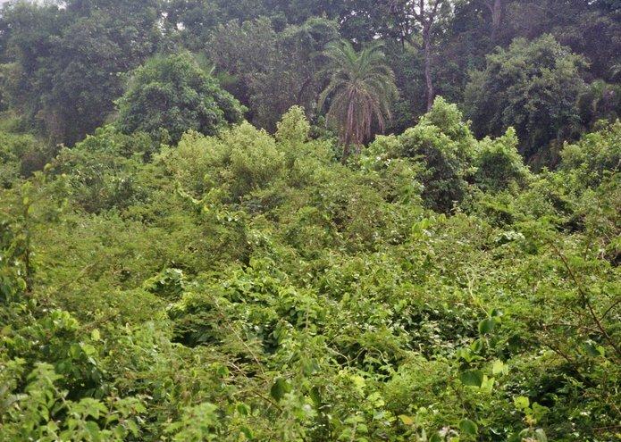 Benin - Groene landschappen