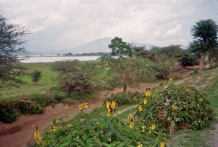 Kokameer in Ethiopië