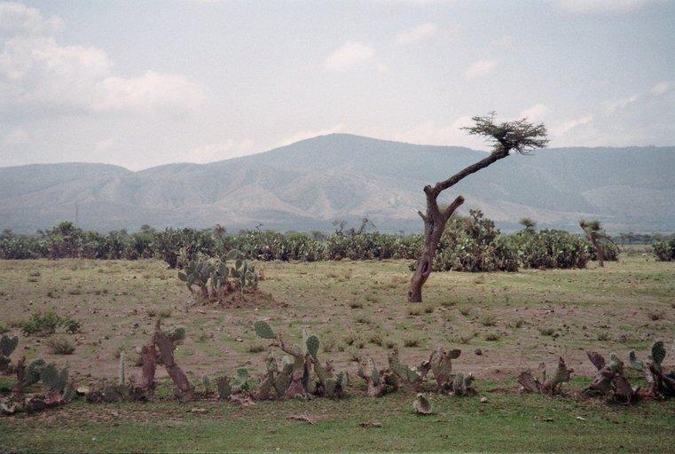 Landschap Ethiopië met cacti