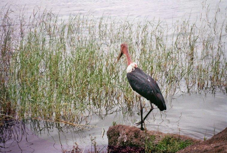 Ethiopische exotische vogel