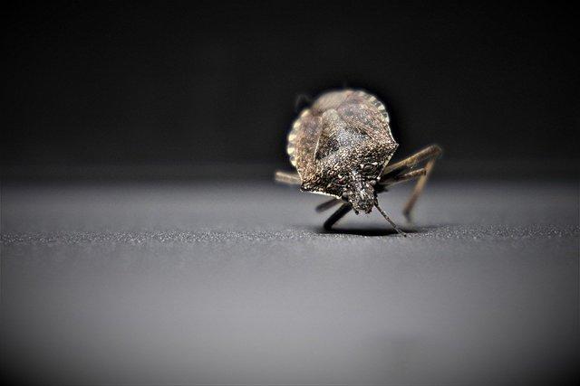 Van Moyale naar Sololo - Bedbugs