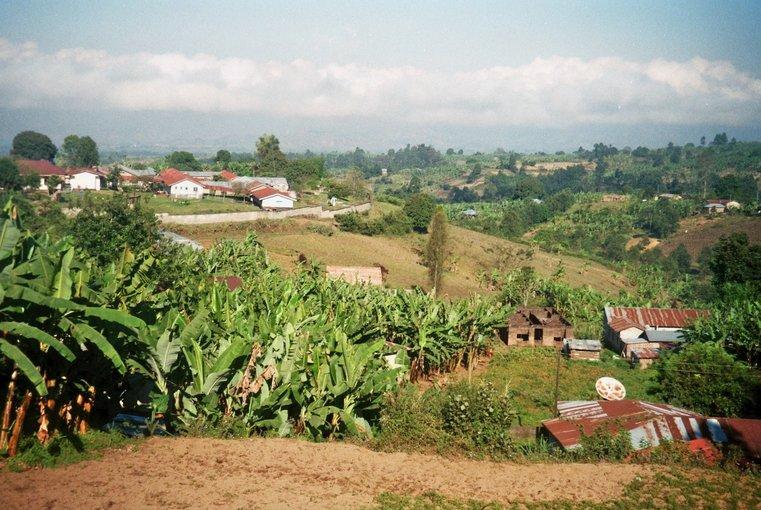 Tanzania - bananenbomen