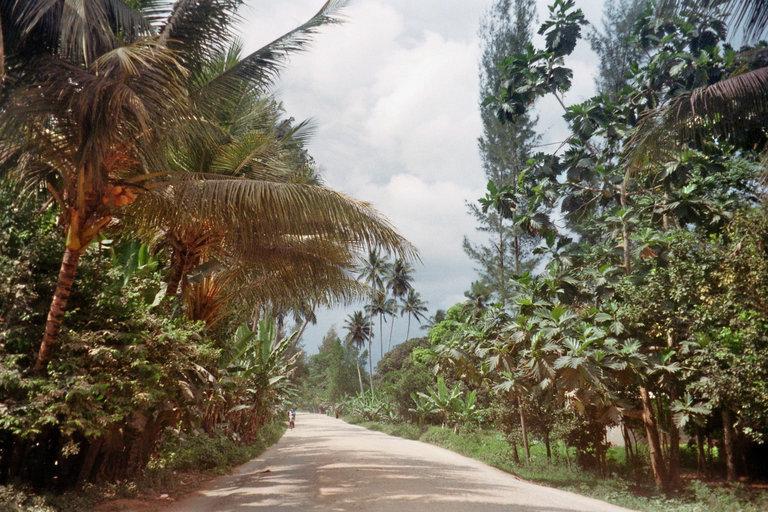 Honderd soorten groen op Zanzibar