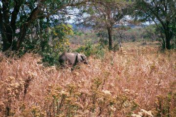 Van Morogoro naar Mikumi - Fietssafari - olifant