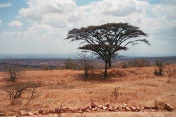 Van Mikumi naar Mahenge - Onuitwisbaar