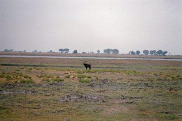 Kasane - Hypocriete razernij - safari