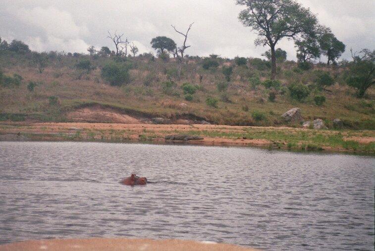 Nijlpaard en krokodil in Kruger Park